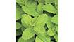 É o Extrato da folha da Menta Piperita estimula o receptor frio da pele e do couro cabeludo, dando a sensação de frescor.