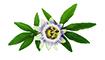 O Óleo de Maracujá é rico em ácidos graxos, minerais e vitaminas A e C.