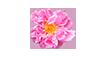 É a Água de Rosas! Além de ser rica em vitamina C e combater os radicais livres, ela acalma a pele sensível e hidrata.