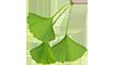 A infusão de Gingko biloba é super importante para a saúde do fio,  além de ativar a circulação sanguínea do couro cabeludo fortificando assim toda a estrutura do fio.