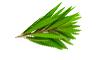 O Óleo de Melaleuca evita a descamação do couro cabeludo e deixa um brilho especial, mesmo em cabelos secos e danificados.